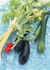 蔬菜天地0275,蔬菜天地,农业,