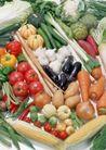 蔬菜天地0287,蔬菜天地,农业,