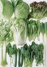 蔬菜天地0293,蔬菜天地,农业,