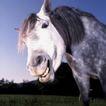 动物百科0014,动物百科,动物,