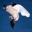 动物百科0025,动物百科,动物,