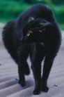 动物百科0030,动物百科,动物,
