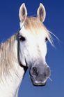动物百科0035,动物百科,动物,