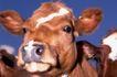 动物百科0037,动物百科,动物,
