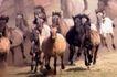 动物百科0051,动物百科,动物,马群 骏马