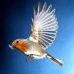 动物百科0058,动物百科,动物,展翅
