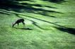 动物百科0059,动物百科,动物,草坪