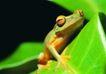 壁虎蜻蛙0057,壁虎蜻蛙,动物,