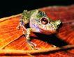 壁虎蜻蛙0064,壁虎蜻蛙,动物,
