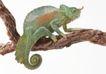 壁虎蜻蛙0065,壁虎蜻蛙,动物,