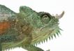 壁虎蜻蛙0066,壁虎蜻蛙,动物,