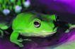 壁虎蜻蛙0071,壁虎蜻蛙,动物,