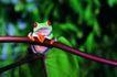 壁虎蜻蛙0072,壁虎蜻蛙,动物,