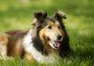 宠物狗狗0148,宠物狗狗,动物,