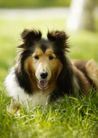 宠物狗狗0150,宠物狗狗,动物,