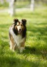 宠物狗狗0151,宠物狗狗,动物,