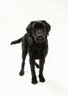 宠物狗狗0175,宠物狗狗,动物,
