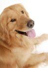 宠物狗狗0177,宠物狗狗,动物,