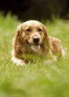 宠物狗狗0185,宠物狗狗,动物,