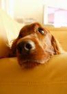 宠物狗狗0187,宠物狗狗,动物,