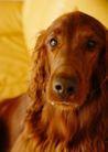 宠物狗狗0188,宠物狗狗,动物,