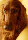 宠物狗狗0189,宠物狗狗,动物,