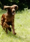 宠物狗狗0193,宠物狗狗,动物,