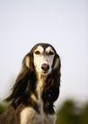 宠物狗狗0196,宠物狗狗,动物,