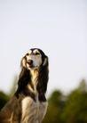 宠物狗狗0197,宠物狗狗,动物,