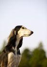宠物狗狗0198,宠物狗狗,动物,