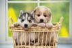 小动物世界0145,小动物世界,动物,
