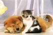 小动物世界0149,小动物世界,动物,