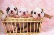 小动物世界0152,小动物世界,动物,可爱小狗