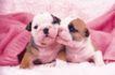 小动物世界0153,小动物世界,动物,两只狗狗