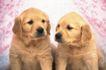小动物世界0154,小动物世界,动物,一对狗狗