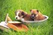 小动物世界0156,小动物世界,动物,草地上的小狗