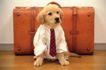 小动物世界0160,小动物世界,动物,领带