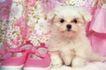 小动物世界0165,小动物世界,动物,粉色鞋子