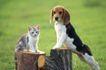 小动物世界0167,小动物世界,动物,耳朵耷拉