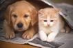 小动物世界0169,小动物世界,动物,狗与猫