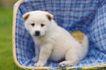 小动物世界0174,小动物世界,动物,白色小狗