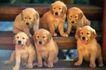 小动物世界0176,小动物世界,动物,金色毛发
