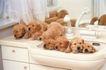 小动物世界0178,小动物世界,动物,洗手间 动物家族