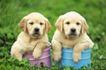 小动物世界0179,小动物世界,动物,宠物狗