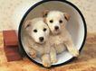 小动物世界0182,小动物世界,动物,铁桶 土狗