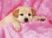 小动物世界0187,小动物世界,动物,睡姿