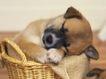 小动物世界0188,小动物世界,动物,竹篓 睡觉