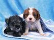 小动物世界0191,小动物世界,动物,