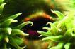 海底大观0005,海底大观,动物,