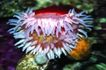 海底大观0011,海底大观,动物,